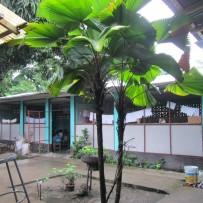 Nuevo campo de actuación:  NIÑOS DE NICARAGUA
